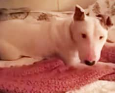 Rescue Dog Experiences A Bed For The First Time